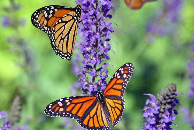 Biodiversidad: así afecta la actividad a la naturaleza