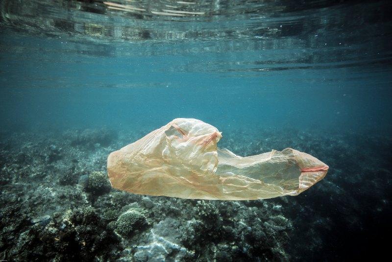 Contaminación ambiental: el impacto de tus acciones