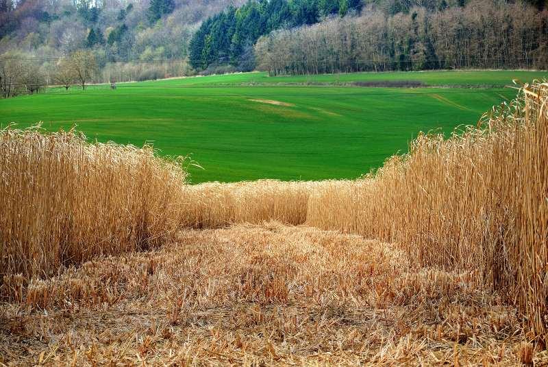 ¿Qué es biomasa? Cambiando la generación de energía