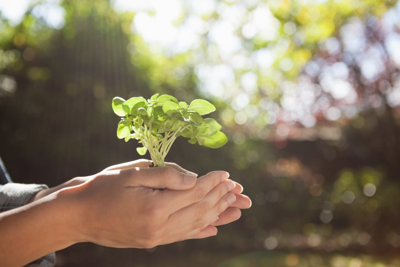 Cultura ambiental: 5 claves para aplicarla en tu empresa
